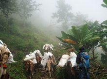 Aufbruch der Maultierherde in Thati - Nepal