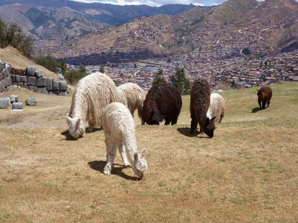 Blick auf Cusco