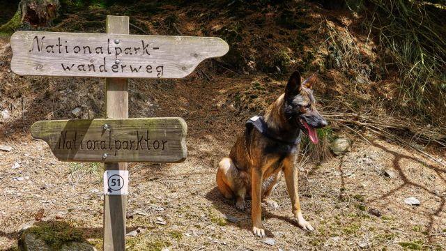 Backpacking Tour Nationalpark Eifel