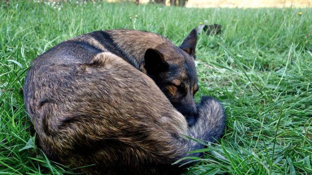 Erschöpfter Hund Luna