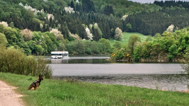 Pfingsten im Nationalpark Eifel