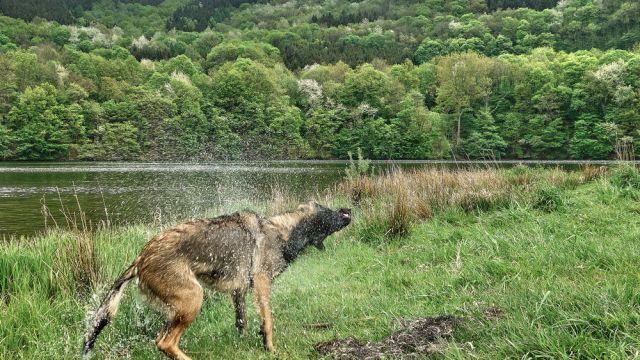 Pfingstwanderung im Nationalpark Eifel