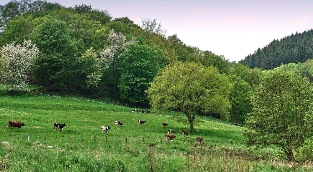 2016 Wanderung Eifel-DSC03554