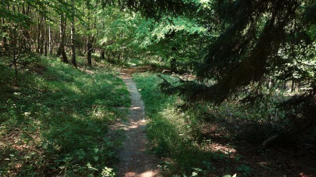 Wandern auf dem Wilden Kermeter