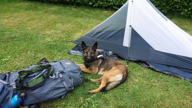 Hund Luna mit Wanderausrüstung