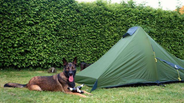 Hundegeeignetes Trek Escape