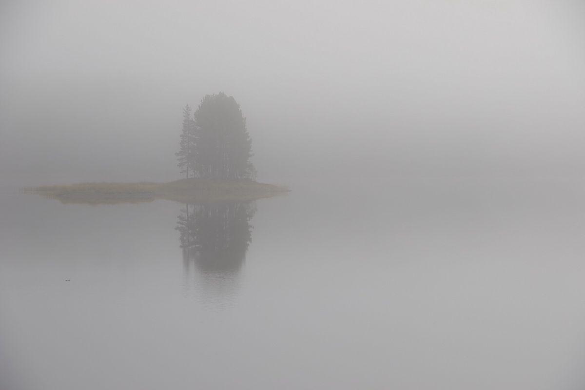 Baum im Nebel - Landschaftsfotografie