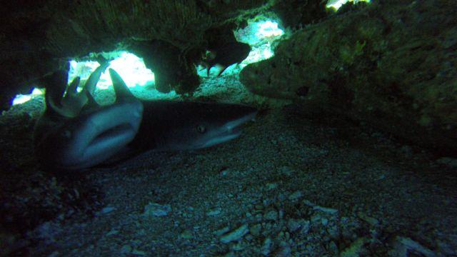 Haie unter Felsen