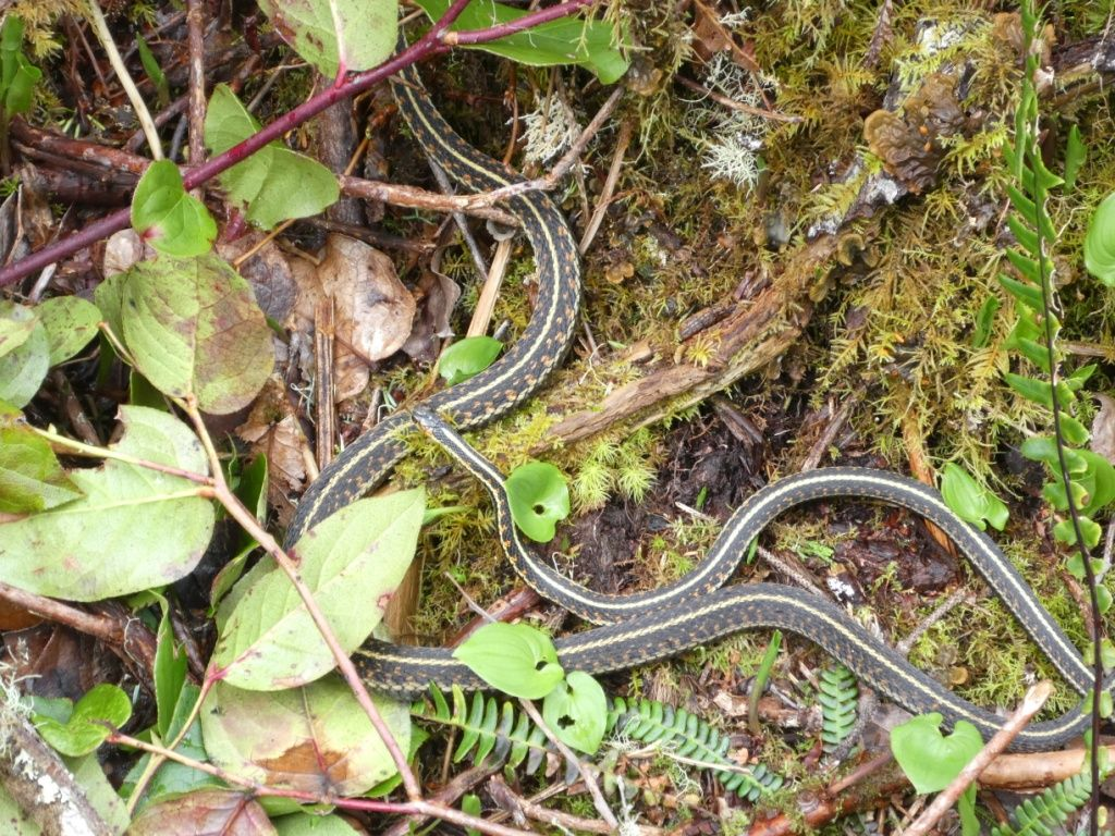 Schlangen P1030418