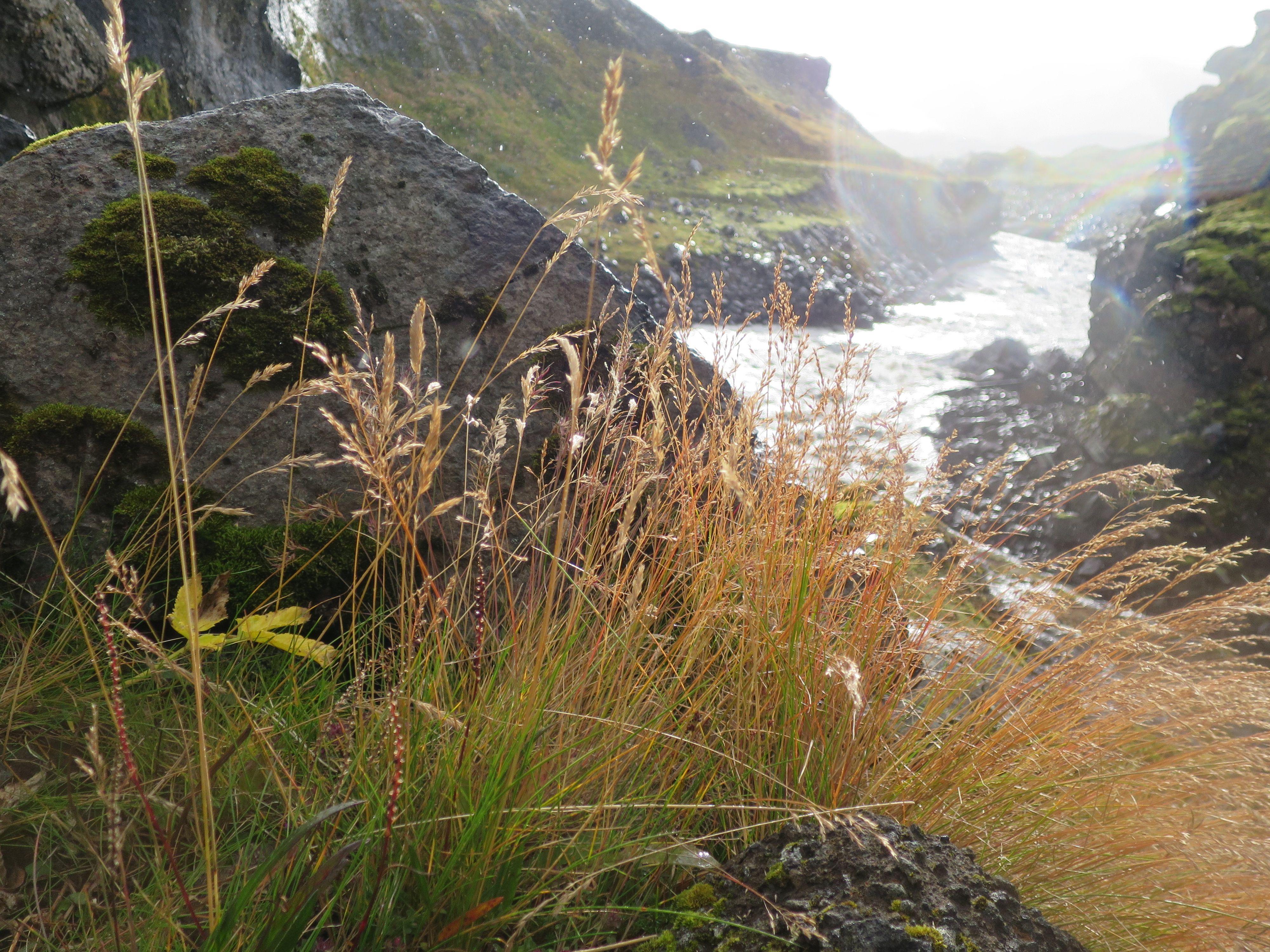 Spielplatz der Elfen in Island