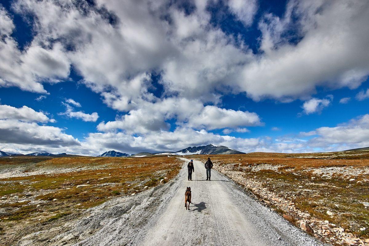 Straße zum Snøheim  im Dovrefjell