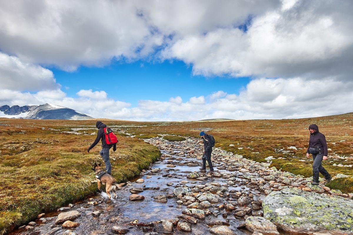 Wanderung im Dovrefjell