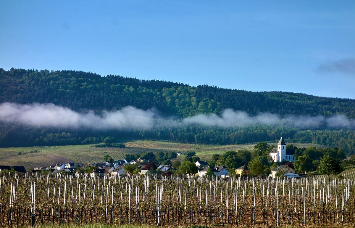 Weinberge und Dorf an der Mosel hinter Trier